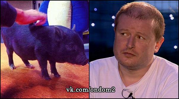 Николай Должанский, свинья