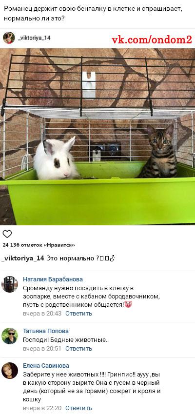 Фото издевательств Виктории Романец над своей кошкой вконтакте